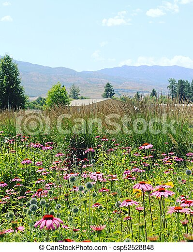 Pink Flowers In Field Pink Flowers And Tall Ornamental Grass In