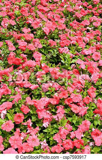 Pink flowers in garden background - csp7593917