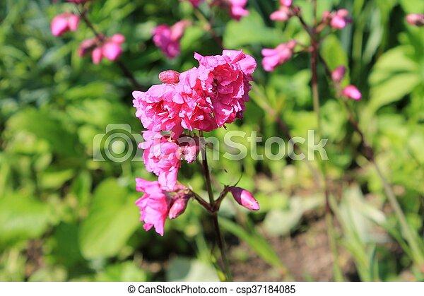 Pink flowers in garden - csp37184085