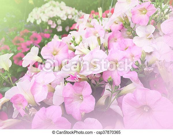 pink flowers in garden - csp37870365