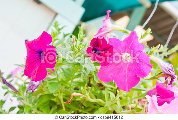 Pink flowers in garden - csp9415012