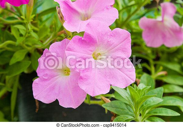 Pink flowers in garden - csp9415014