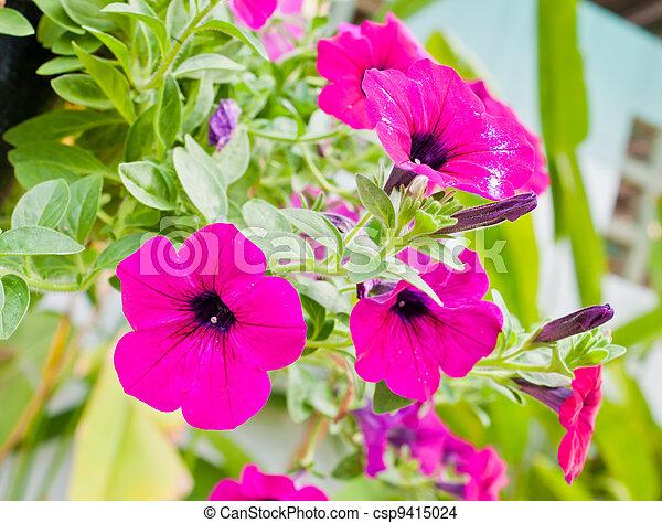 Pink flowers in garden - csp9415024