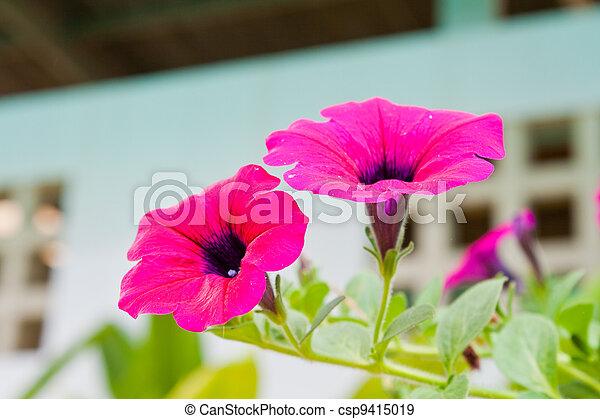 Pink flowers in garden - csp9415019