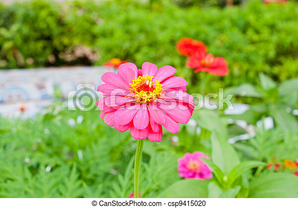 Pink flowers in garden - csp9415020