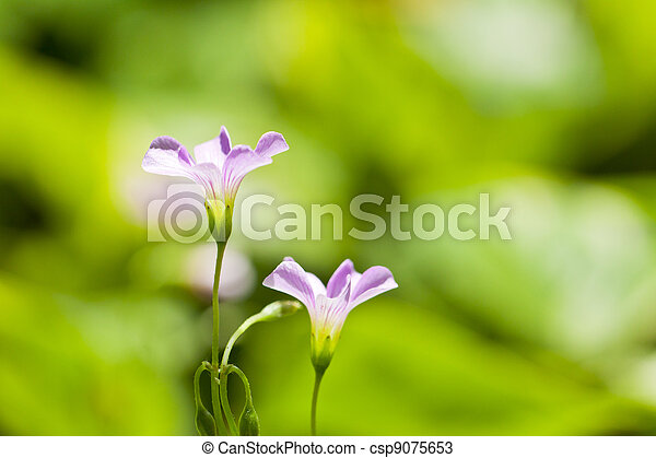 Pink flowers in green background - csp9075653