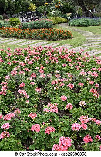 pink flowers in green grass garden - csp29586058