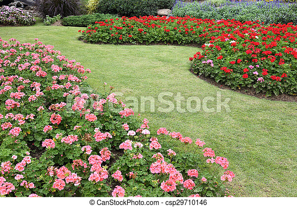 pink flowers in green grass garden - csp29710146