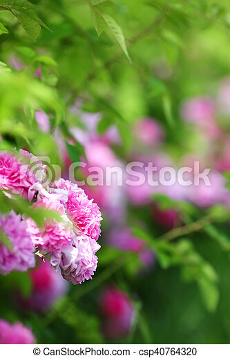 pink flowers in green park garden, nature background - csp40764320