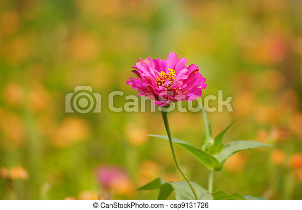 Pink flowers in spring background - csp9131726