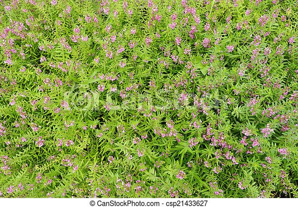 Pink flowers in the garden background - csp21433627