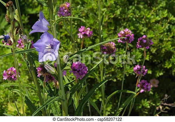 Pink flowers in the garden - csp58207122