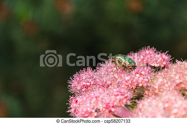 Pink flowers in the garden - csp58207133