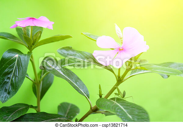 Pink flowers on a blue background - csp13821714