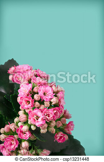 Pink flowers on blue background - csp13231448