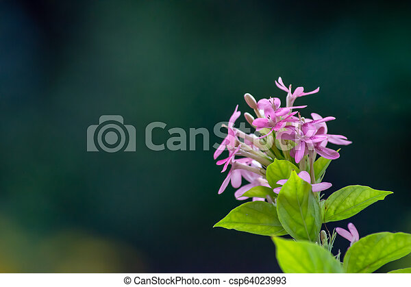 Pink flowers on green leaves in background. - csp64023993