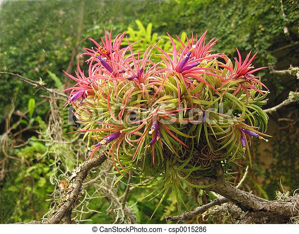 Pink Flowers - csp0015286