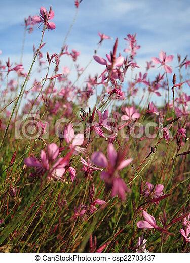 pink flowers - csp22703437