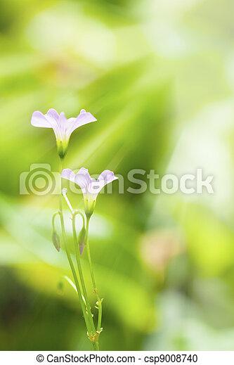 Pink flowers under sunshine in spring - csp9008740