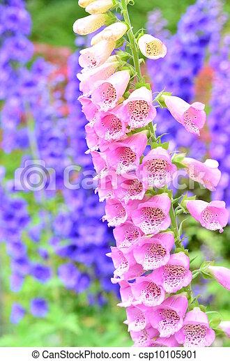 Pink Foxglove Flowers In Butchart Garden