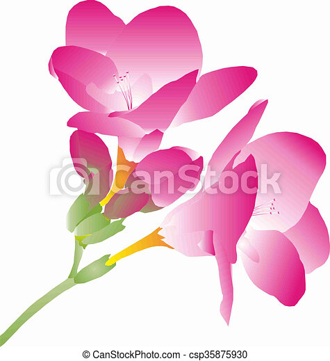 Pink freesia branch with pink flowers freesia drawings search pink freesia csp35875930 mightylinksfo