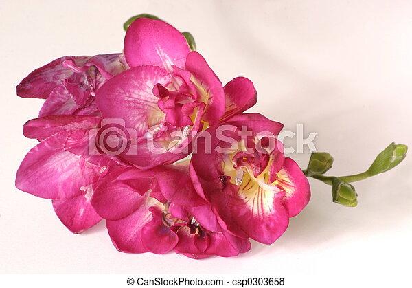 Details of a pink freesia flower head pink freesia csp0303658 mightylinksfo
