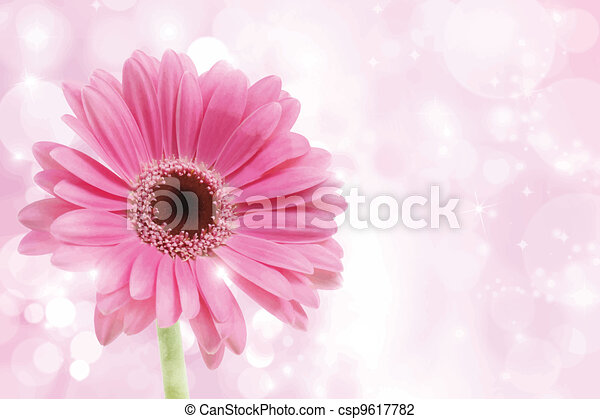 Daisy Flower Line Drawing : Detailed illustration of a pink gerbera daisy on sparkly