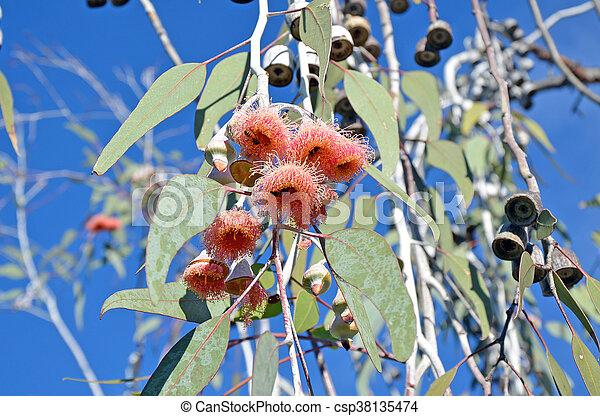 Gumtree west australia