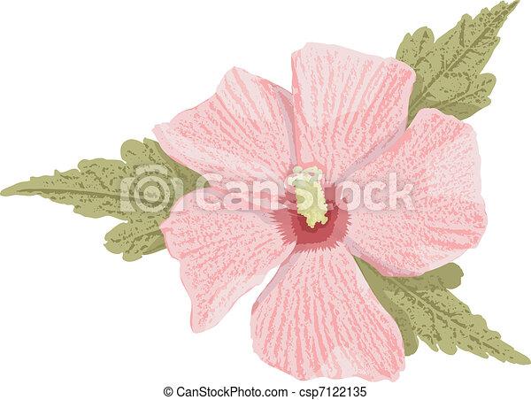 Pink hibiscus - csp7122135