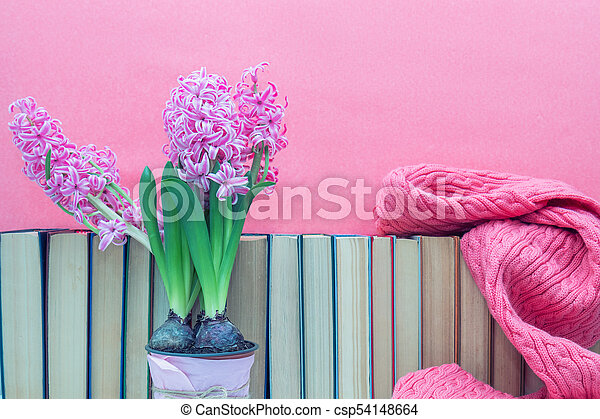 Pink hyacinths in pot infront of pile of books at pink background. Beautiful spring pink background. Copy space. - csp54148664