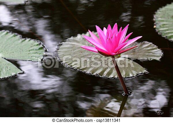 PInk Lotus on the River - csp13811341