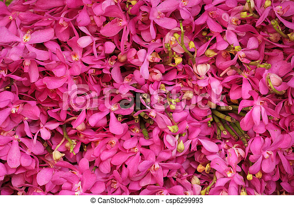 pink orchid background - csp6299993