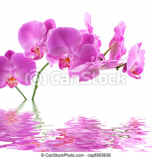 Pink Orchid - csp8563636