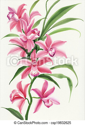 Pink orchid - csp19832625
