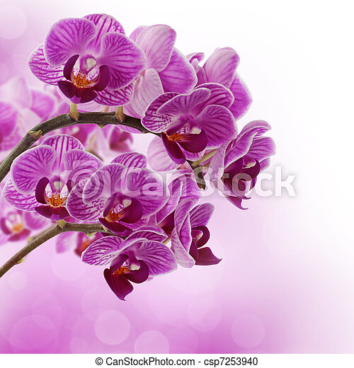 Pink orchid - csp7253940