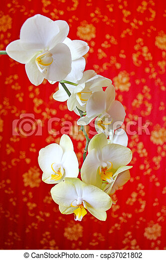 Pink Orchids On The Background Of Luxurious Wallpaper