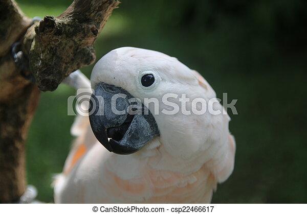 pink parrot - csp22466617