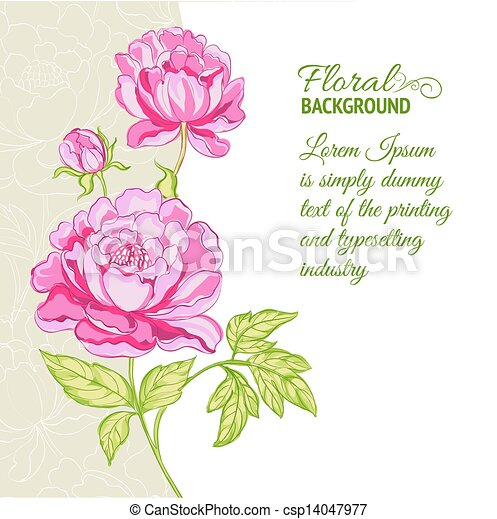 Pink peonies background with sample text - csp14047977