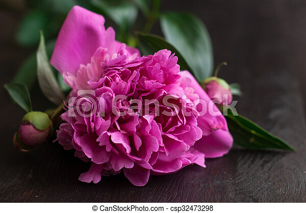 pink peonies on rustic wooden background - csp32473298