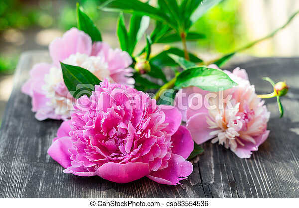 Pink peonies on wooden background, closeup view - csp83554536