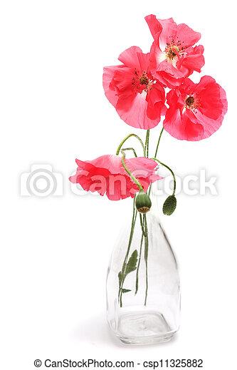 Pink poppy - csp11325882