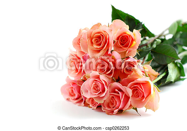 Pink rose bouquet on white - csp0262253