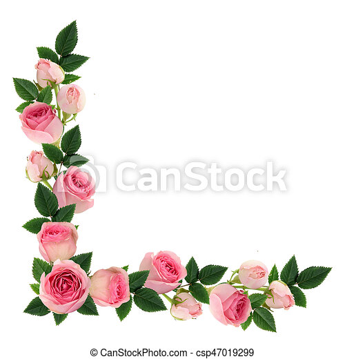 Pink Rose Flowers And Buds Corner Arrangement Isolated On White