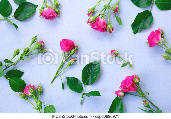 pink roses flowers on a blue background. - csp80690971