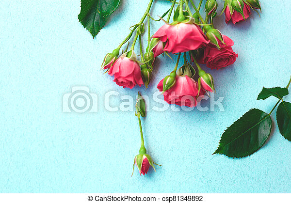pink roses flowers on a blue background. - csp81349892