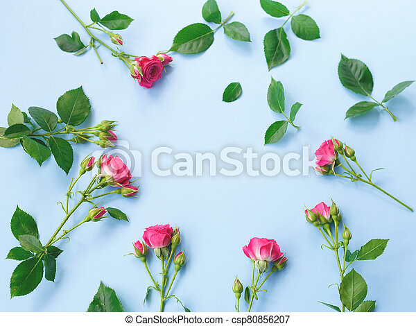 pink roses flowers on a blue background. - csp80856207