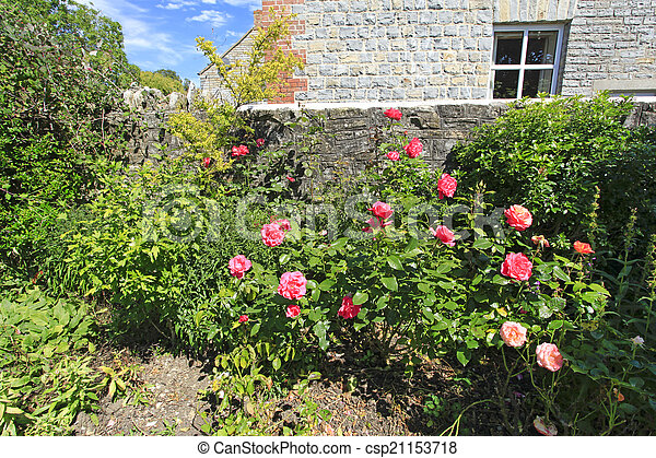 Pink Roses in a Country garden - csp21153718