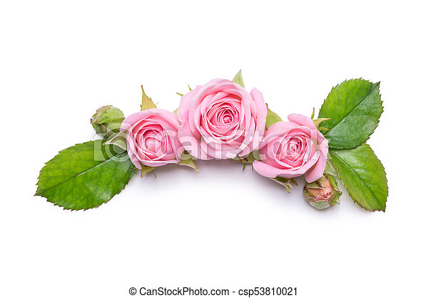 Pink roses on a white background border of flowers pattern for pink roses on a white background border of flowers pattern for invitation card mightylinksfo