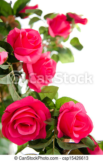 Pink roses on white background - csp15426613