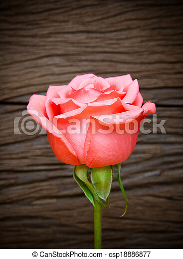 Pink roses on wooden background - csp18886877